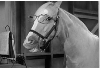 Mr. Ed The Talking Horse